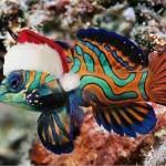 Weihanchtsfisch