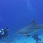 Sabine mit Delphin